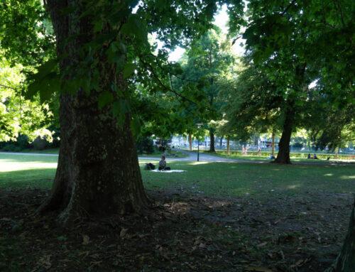 Feierabendpicknick im Platzspitzpark