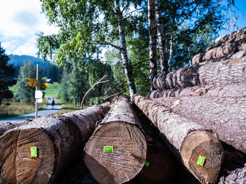 Wolzenalp Bergstation - Ausgangspunkt für die Wanderung via Ijental nach Nesslau