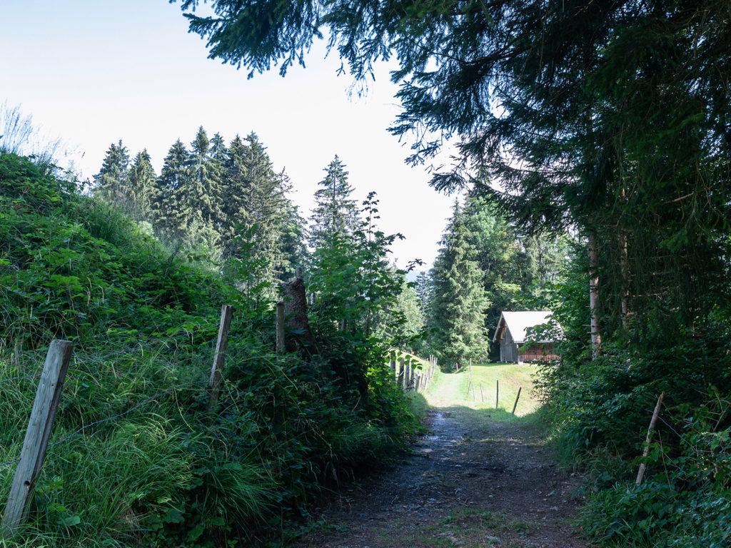 Und immer wechseln sich Waldwege, Wiesenwege und schmale Pfade ab.